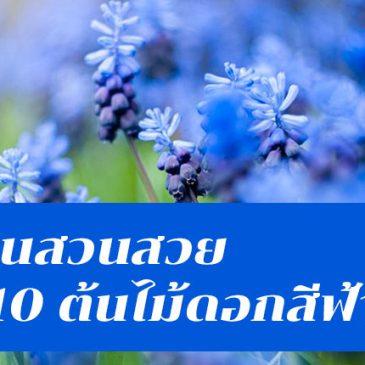 คุมโทนสวนสวยด้วย 10 ต้นไม้ดอกสีฟ้า สีหายากแต่งสวนแล้วปัง